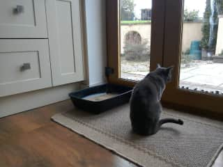 Georgie the cat contemplates life through the window.  Derbyshire house and pet sit