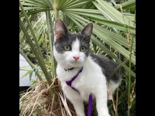 Bonnie in the jungle (garden!)