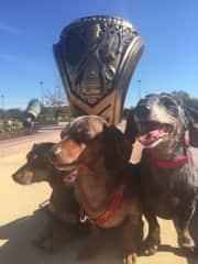 My dachshund visiting my alma mater, Texas A & M University.