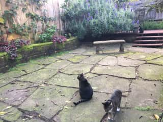 All 3 cats in yard