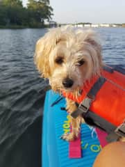 Bella - Paddleboarding dogs will love me!