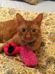 Dexter and Little Pink Sock