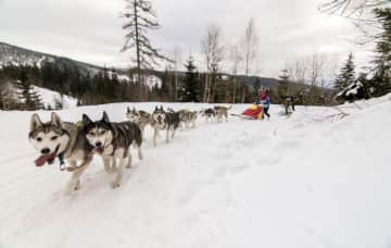 Our family is crazy into mushing!