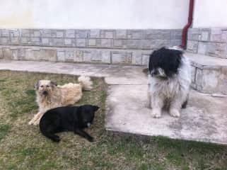 My best buddies in Ferdea, Romania