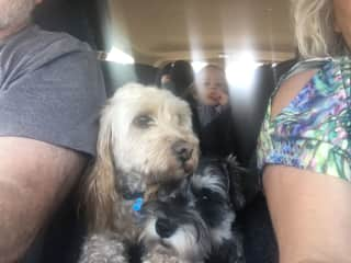 They have to always be near us, even when travelling in the car!