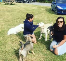 Dogs galore at our family home 2019