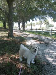 A MANY times repeat dog friend Stella who I absolutely ADORE, on one of our millions of walks at a fav local nature park (FL)