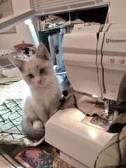 Quilting with Kitty Storm