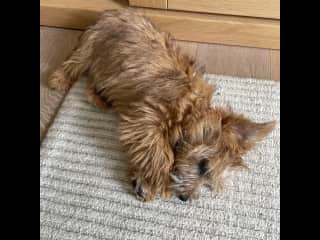 It's all soooo tiring...