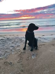 Grace enjoying the beach with an AMAZING sunrise in the background!