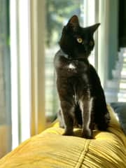 Luna and Ozy are 3 yr old sisters and hard to tell apart at first glance. Occasionally playful and speedy (for 15 minutes after eating), but mostly lazy all day. They love people and each other, but nothing more than a lounge on the sofa or the deck.