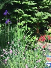 spring in the back garden... love my garden.