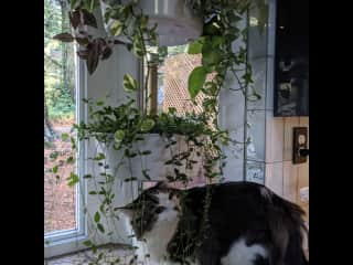 Buun explores the jungle of plants. We have many exotic plants, and are comfortable taking care of plants!