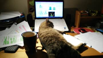 My cat do not like when I study for exams because I should care only about him of course. =)