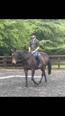 Horse Riding in Honiton, UK with Maddie