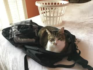 Jack, My first Trusted House/Cat sit, Savannah, GA