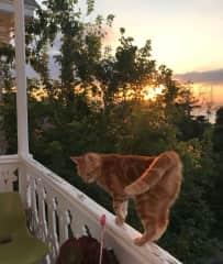 Yeter, loves the balcony at sunrise. Sitting on Buyukada for Tugba July 2021