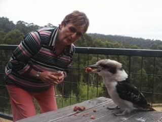 My young Mama Carol with a kookaburra