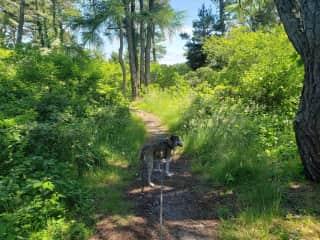Trail walk with Itty-Bitty