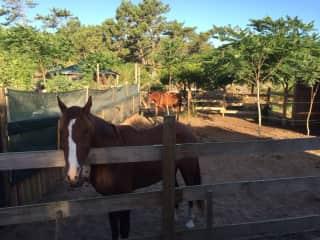 Horses waiting for breakfast ;-)