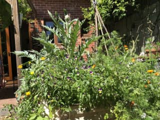 One of the many garden beds with veggies and herbs ready to pick.