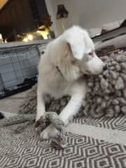 """Dog sitting Hadley. ❤️Deaf, blind, epileptic ... this dog is the true meaning of """"rescue"""" .  Such a gentle soul despite what life has dealt her. Love!"""