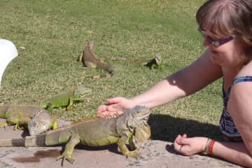 In Mexico with some iguanas