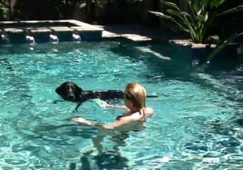 Swimming with Hazel, Sarasota Florida