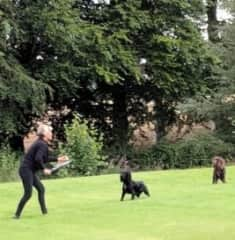 Nicky playing with Otis and Gus in Blairgowrie, Scotland