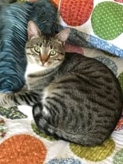 Scooby, the, polydactyl, fabric-eating wonder cat--my crazy boy.  Nothing can be left where he can get it--shoelaces, clothes, hairbands, floss