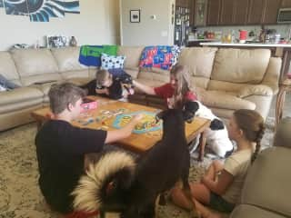 Playing a board game with a couple of our favorite pooches!