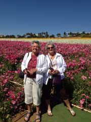 Flower fields Carlsbad,California