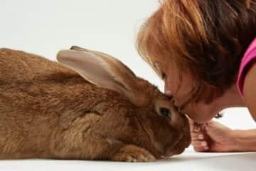 Everyone should kiss bunnies for their mental health!