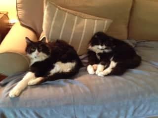 Dexter and Albert just chillin'