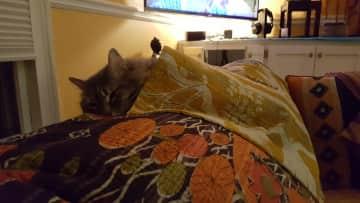 Zara- cuddling in- just leave me alone, please :)