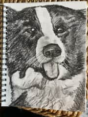 Arte. The Border Collie who lives in Mallorca. I started sketching dogs on my sits.