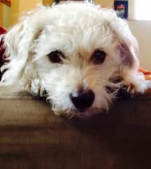 June is a sweet and mellow dog who loves to be around people.