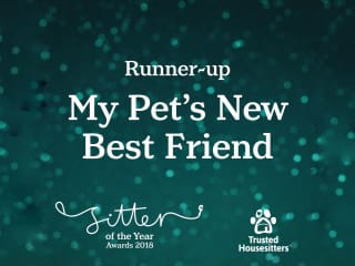 Petsitter of the year competition 2018.