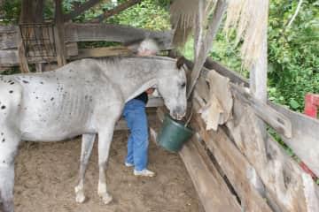 Deb feeding Eagle the horse.