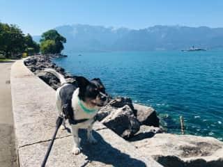 Bean by Lake Geneva