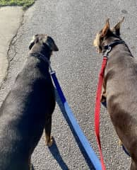Housesit-Out for a neighborhood stroll