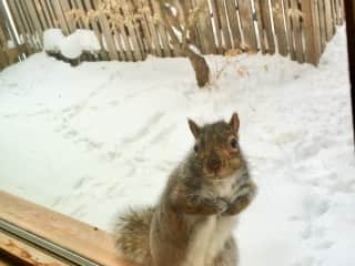 2018 - A squirrel at my office window