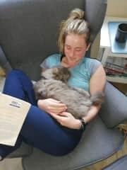 My Au Pair family's cat - Petterson