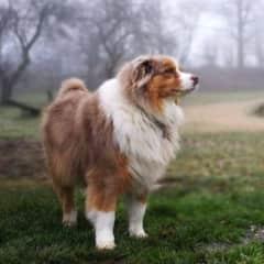 My Dog Casper