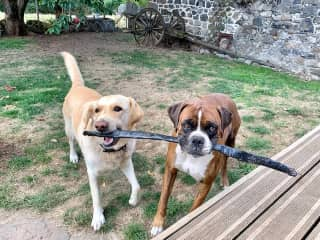 Pirate and Iggy, Two Best Friends, from a housesit in France