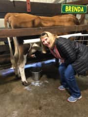 Fun attempt at milking a cow