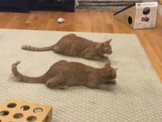 They both like the laser pointer.