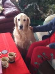 Bruce - dog sit