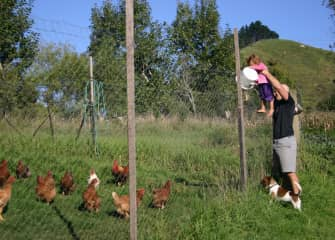 Brian, with a securely bonded Kip by his side, helping a helper feed the chooks.