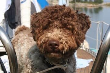 Our dog Kazzi 💕